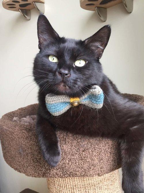 Cat accessories boutique